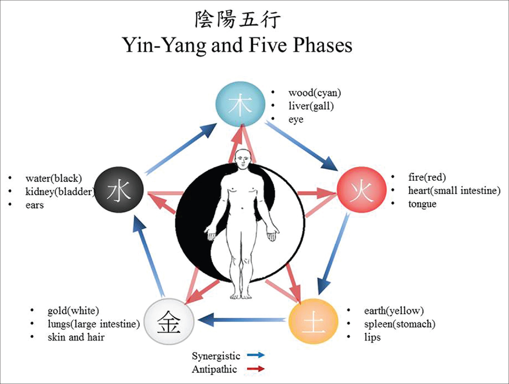 Traditional chinese medicine and herbal supplements for