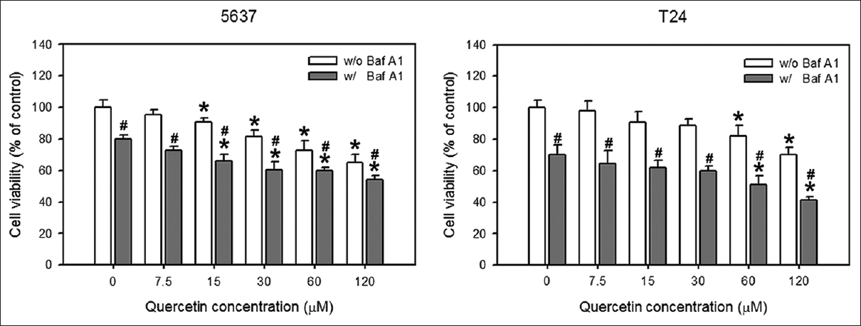 Figure 4: Suppression of quercetin-induced autophagy further decreased cell viability. Cell viability was determined by using WST-1 reagent. The 5637 and T24 cells were treated with increasing doses (0–120 μM) of quercetin for 48 h with or without the 2 h pretreatment of 200 nM bafilomycin A1. Data are the mean ± standard deviation of three independent experiments which performed in quarto duplicated. *<i>P</i> < 0.05 compared to control. <sup>#</sup><i>P</i> < 0.05 compared to bafilomycin A1 untreated group